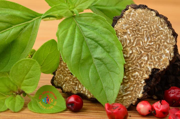 Siyah Trüf Mantarı ve Tıbbi – Aromatik Bitkiler Ağı